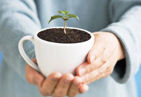 bã cà phê có thể dùng làm phân bón