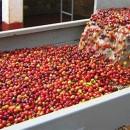 Chế biến cà phê phương pháp Ướt