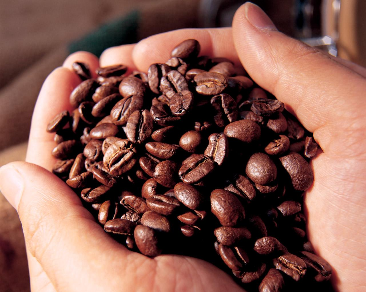 Cách nhận biết - phân biệt cà phê