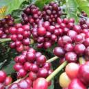 Nâng cao vị thế Cà phê và văn hóa cà phê Việt Nam
