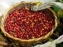 Các phương pháp chế biến cà phê: chế biến khô
